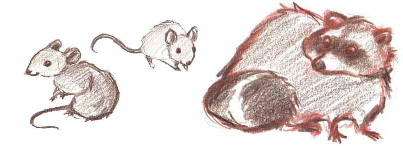 Sophia-Fendel-Kinderbuchillustration-Tiere-Skizzenbuch