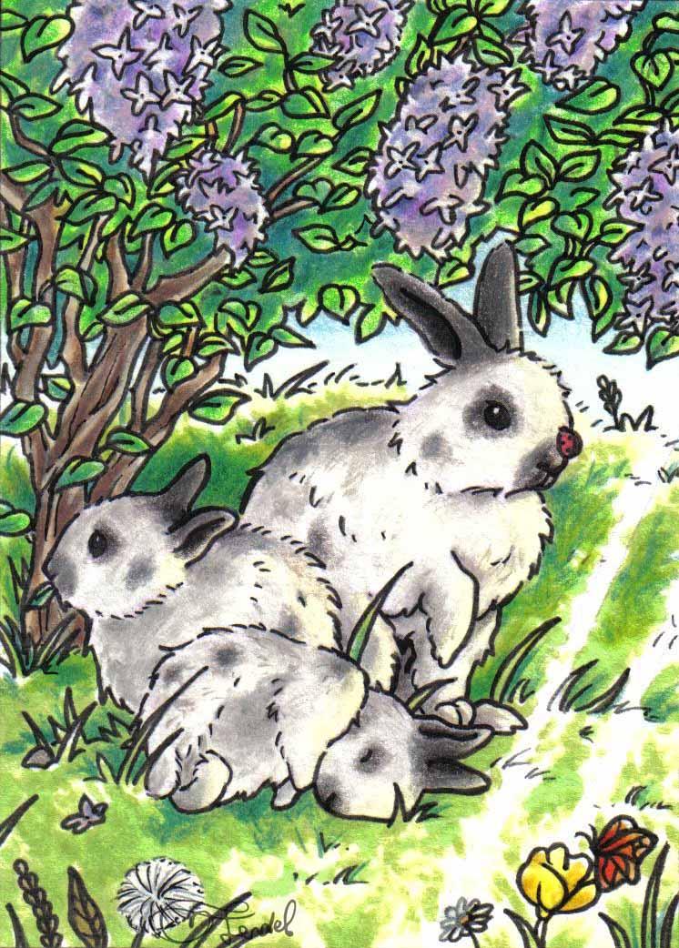 Sophia-Fendel-Kakao-Karte-Hase-Frühling